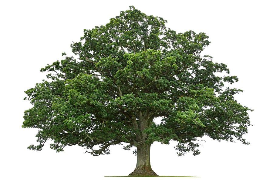 arborists in sacramento