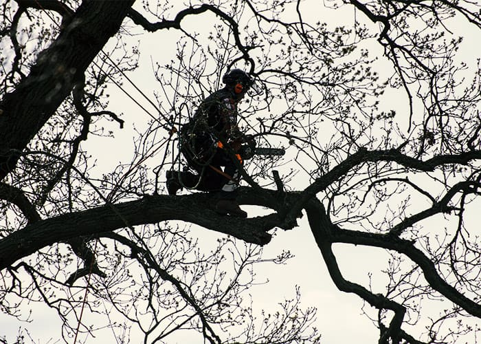 tree services sacramento
